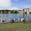 seagulls near a pond in the center of reykjavik — Stock Photo #35080139