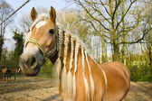 Horse with pigtails agains spring background — Stock fotografie