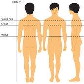 Men's Size Chart — Stock Vector