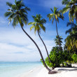 Tropical beach — Stock Photo #16271865