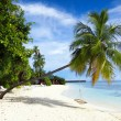 Maldives beach — Stock Photo #16272745
