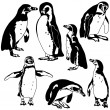 Stock Vector: Penguin Collection