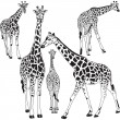 Giraffe collection — Stock Vector #33723951