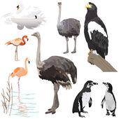 Multitude d'oiseaux — Vecteur