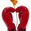 Boxing glove and flower — Stock Photo
