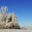 Stock Photo: Prairie Winter Landscape