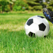 Stock Photo: Youth Soccer Kick