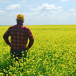 Stock Photo: Farmer Inspecting CanolCrop