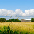 Country Farm Scene — Stock Photo