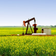 Pump Jack in Alberta Canola Field - Foto Stock