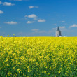 Stock Photo: CanolField and Elevator