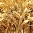 Closeup of golden wheat — Stock Photo #12778865