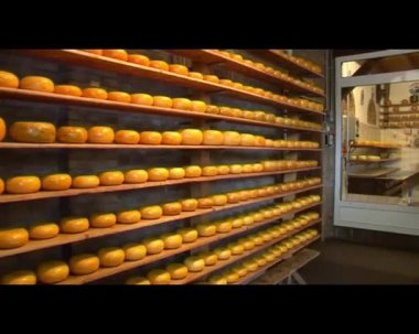 Cheese rounds — Stock Video
