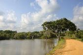 Wildlife Panorama — Stockfoto