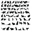 Stock Photo: Cat silhouettes