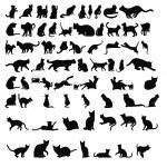 Cat silhouettes — Stock Photo