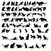 Cat silhouettes — Stock Photo