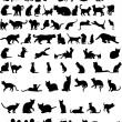 Stock Vector: Vector silhouettes of cats