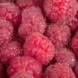 A beautiful selection of freshly picked ripe red raspberries. — Stock Photo #50855927