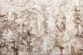 Texture of a birch bark, blurry around the edges — Stock Photo