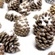 The cones on the snow - Stock Photo