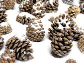 The cones on the snow — Stock Photo
