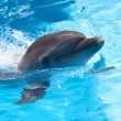 Stock Photo: Dolphin in pool