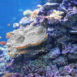 Colourful coral reef — Stock Photo #13731544