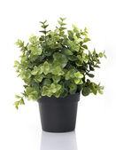 Strona główna roślina w doniczce — Zdjęcie stockowe
