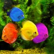 Fishes — Stock Photo #22572773
