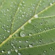 Macro leaf — Stock Photo #22573527