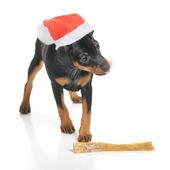 Dog in Santa hat isolated — Stock Photo
