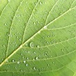 Macro leaf close up — Stock Photo #29787377