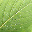 Macro leaf close up — Stock Photo