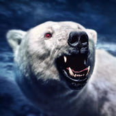 Angry white polar bear with the sharp teeth — Stock Photo