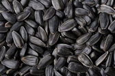 Sunflower seeds — Photo