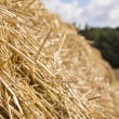 Sunny hay texture — Stock Photo
