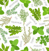 Herbs pattern on white — Stock Vector