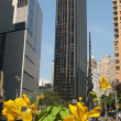 Skyscraper and yellow flower — Stock Photo #14746847