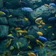 Background of African fishes — Stok fotoğraf