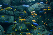 Background of African fishes — Stock Photo