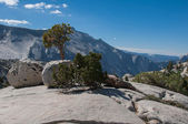 Trees and glacial erratic boulders in Yosemite — Stock Photo