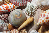 Seashells by the Seashore — Stok fotoğraf