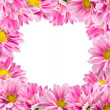 Royalty-Free Stock Photo: Framed color pink chrysanthemums