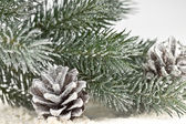 Snow-covered fir branches and cones — Stock Photo