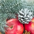 图库照片: Christmas red apples, snow-covered pine cone and fir branches