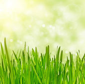 Grass on bokeh background — Stock Photo