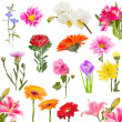 Collage of blooming flowers — Stock Photo #19323357