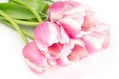 Blooming beautiful pink tulips — Stock Photo
