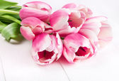 Blooming pink tulips — Stock Photo